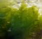 СИНЕ-ЗЕЛЕНАЯ ВОДОРОСЛЬ АЛЬГАЕ (AFA)